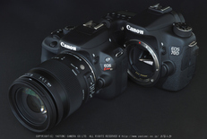SIGMA18_200mm,kissX7_2014yaotomi_ (1) .jpg