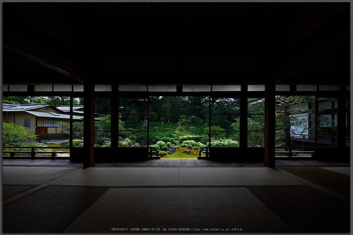 両足院,半夏生(PEM10008,7-mm,F5.6)2015yaotomi_2T.jpg