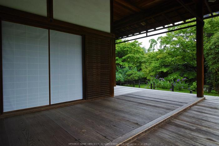 天授庵,夏の庭園(DP0Q0185,5.6,1-100 秒)2015yaotomi_.jpg