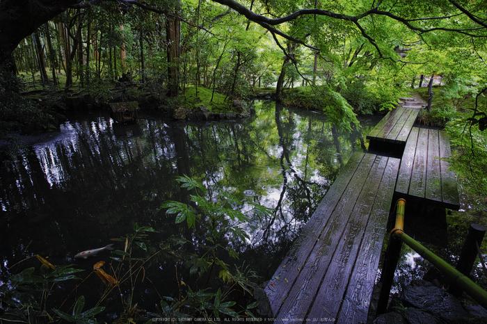 天授庵,夏の庭園(DP0Q0192b,5.6,1-15 秒)2015yaotomi_.jpg