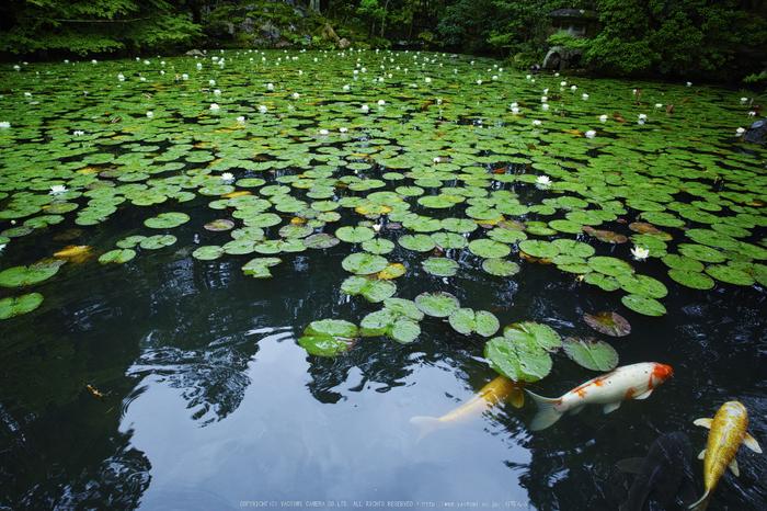 天授庵,夏の庭園(DP0Q0220,5,1-80 秒)2015yaotomi_.jpg