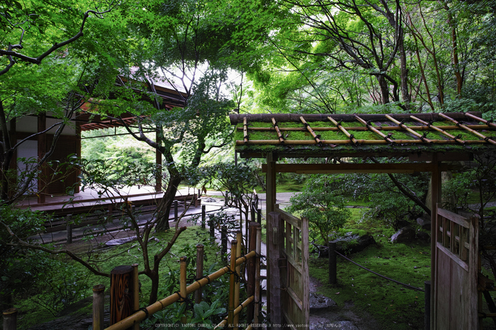 天授庵,夏の庭園(DP0Q0242,5.6,1-15 秒)2015yaotomi_.jpg