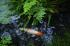 天授庵,夏の庭園(DP2Q0194,F3.5,1-125 秒,full)2015yaotomi_.jpg
