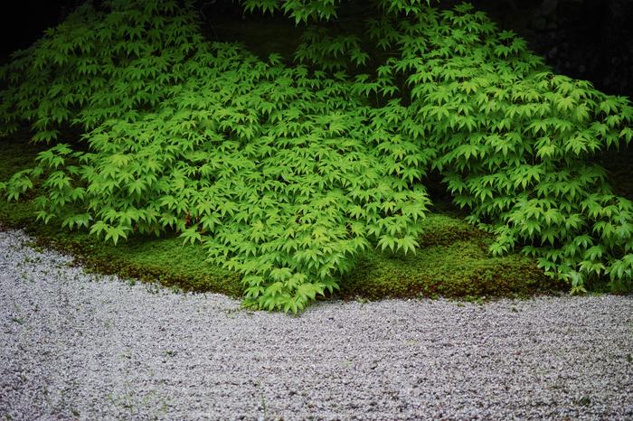 天授庵,夏の庭園(DP3Q1170,F2.8,1-400 秒)2015yaotomi_.jpg