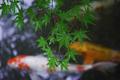 天授庵,夏の庭園(DP3Q1192,F3.2,1-60 秒,full)2015yaotomi_.jpg