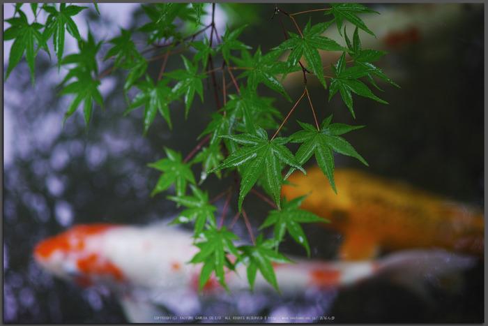 天授庵,夏の庭園(DP3Q1192,F3.2,1-60-秒)2015yaotomi_T.jpg
