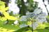宇陀,山紫陽花(DP3Q0961,F9,FULL)2015yaotomi_.jpg