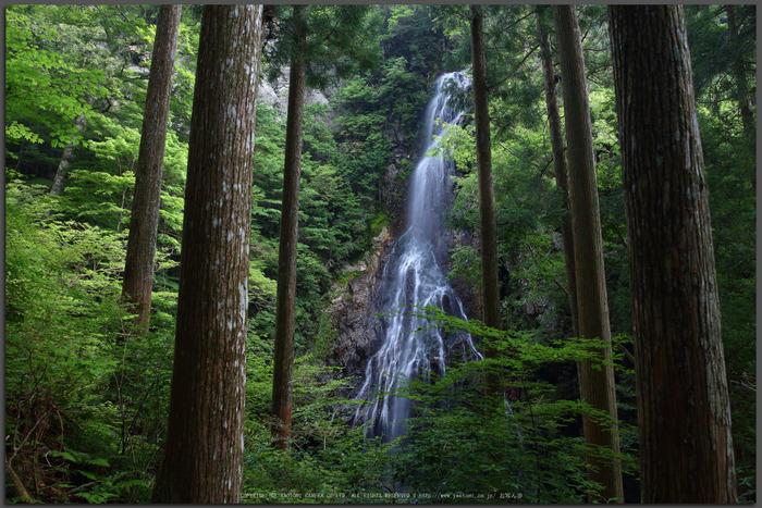 御船の滝,夏(5DS_7042,24-mm,F7.1)2015yaotomi_T.jpg