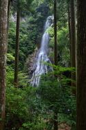御船の滝,夏(5DS_7047,27 mm,F4,FULL)2015yaotomi_.JPG