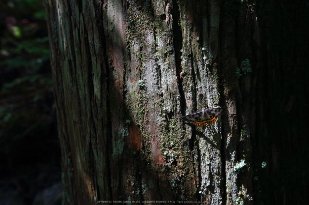 御船の滝,夏(5DS_7090,32 mm,F4)2015yaotomi_.jpg