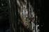 御船の滝,夏(5DS_7090,32 mm,F4,FULL)2015yaotomi_.JPG