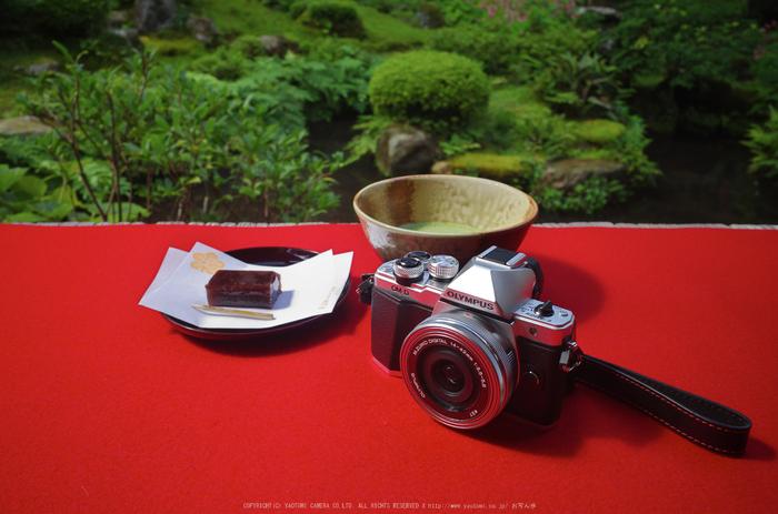 OM-D,E-M10II_2015yaotomi_03.jpg