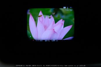 Panasonic,GX8_2015yaotomi(17).jpg