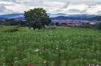 御所,九品寺(DSCF8119_f,25 mm,F9)2015yaotomi.jpg