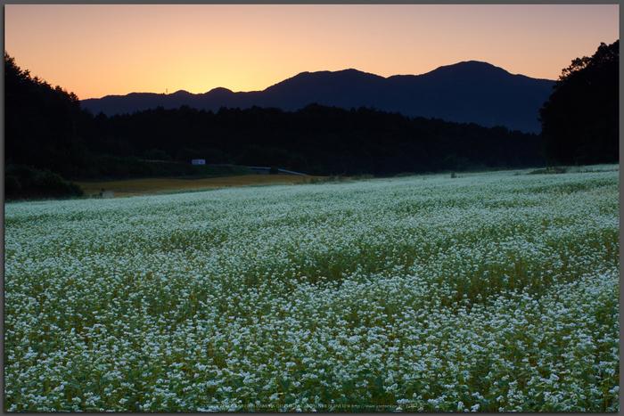 桜井,笠,そば(K32_0834a,35-mm,F18,iso100)2015yaotomi_T.jpg