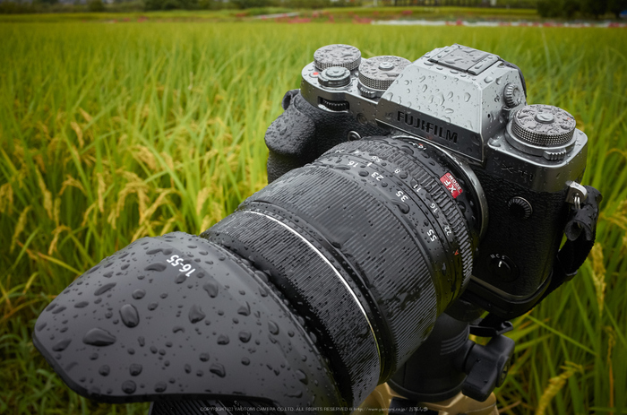 葛城,彼岸花(R2010482,18 mm,F11,iso400)2015yaotomi_.jpg