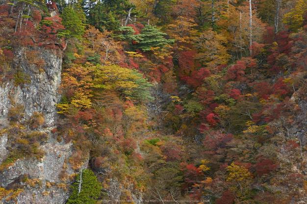大台ヶ原,紅葉(K32_1539,58 mm,F6.3,iso100)2015yaotomi_.jpg