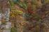 大台ヶ原,紅葉(K32_1539f,58 mm,F6.3,iso100)2015yaotomi_.jpg