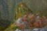 大台ヶ原,紅葉(K32_1571f,24 mm,F8,iso100)2015yaotomi_ 1.jpg