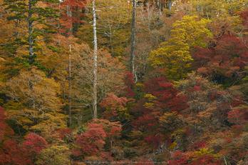 大台ヶ原,紅葉(K32_1598,140 mm,F5.6,iso100)2015yaotomi_.jpg