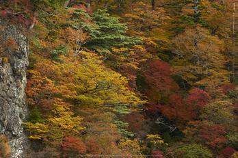 大台ヶ原,紅葉(K32_1600,140 mm,F7.1,iso100)2015yaotomi_.jpg