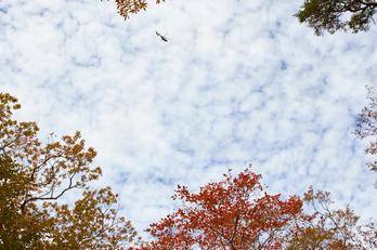 大台ヶ原,紅葉(K32_1700,24 mm,F5.6,iso100)2015yaotomi_.jpg