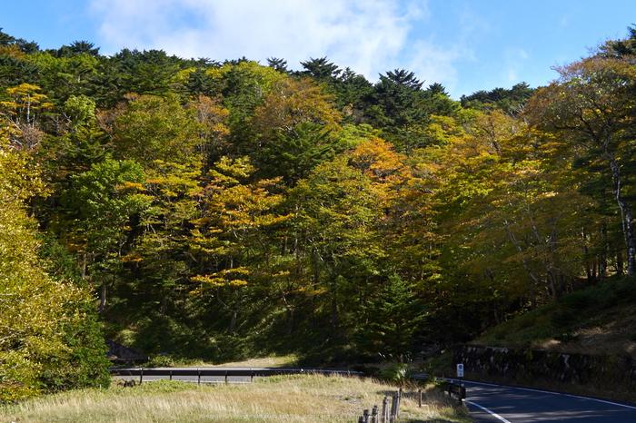 大台ヶ原,紅葉(P1070386,25-mm)2015yaotomi_a.jpg