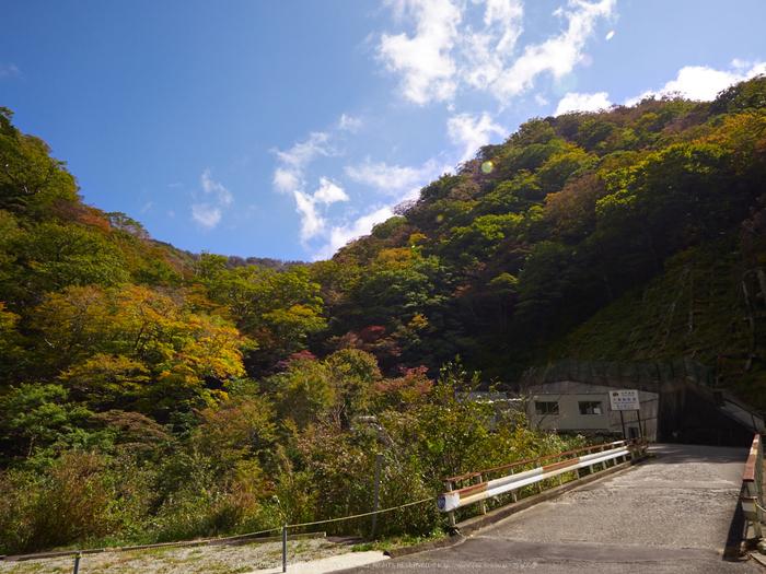 大台ヶ原,紅葉(P1070398,13 mm,F8)2015yaotomi_.jpg
