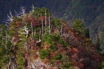 大台ヶ原,紅葉(P1070903,144 mm,F5.6,iso200)2015yaotomi_a.jpg