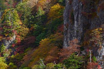 大台ヶ原,紅葉(P1070966,63 mm,F8,iso200)2015yaotomi_ 1.jpg