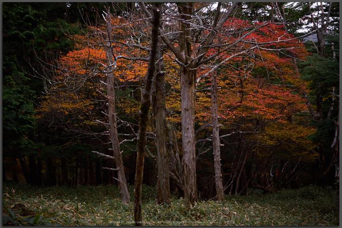 大台ヶ原,紅葉(P1080032,25-mm,F1.7,iso200)2015yaotomi_T.jpg