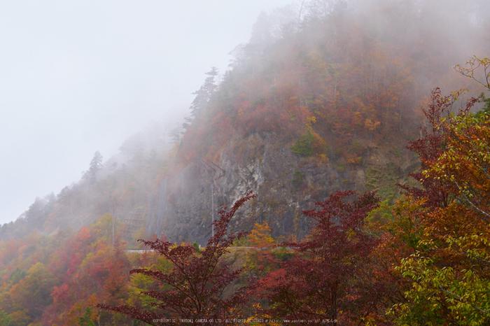 大台ヶ原,紅葉(P1080110,25 mm,F3.5,iso200)2015yaotomi_ 1.jpg