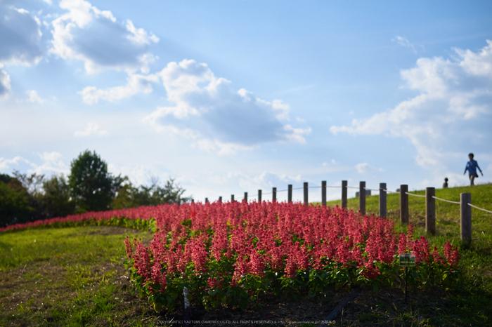 馬見丘陵公園(P1070434,25-mm)2015yaotomi_a.jpg