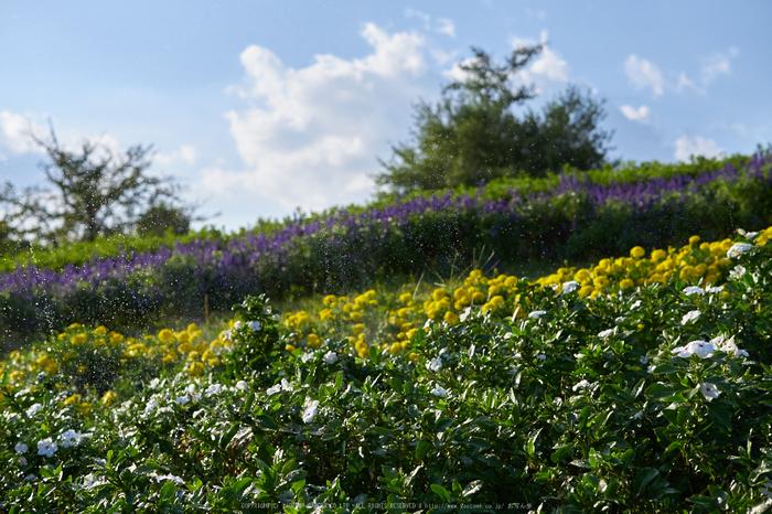 馬見丘陵公園(P1070446,25-mm)2015yaotomi_a.jpg