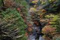 みたらい渓谷,紅葉(IMG_8674,20 mm,F7.1,iso200)2015yaotomi_ 1.jpg