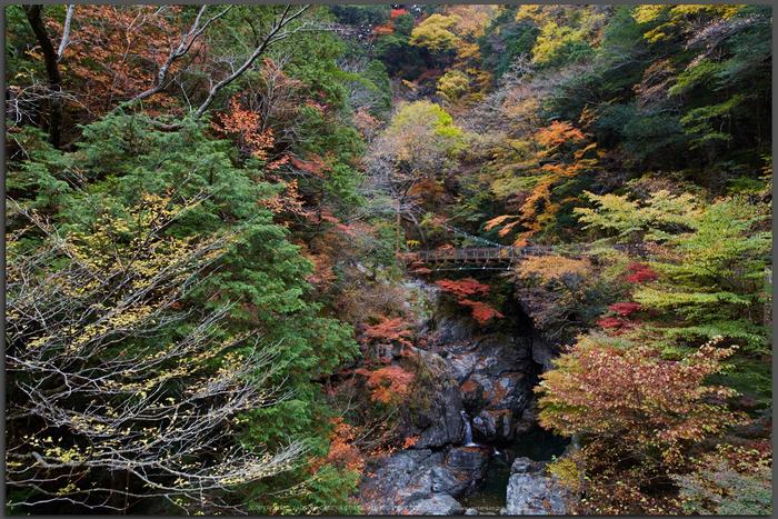 みたらい渓谷,紅葉(IMG_8674,20-mm,F7.1,iso200)2015yaotomi_T.jpg
