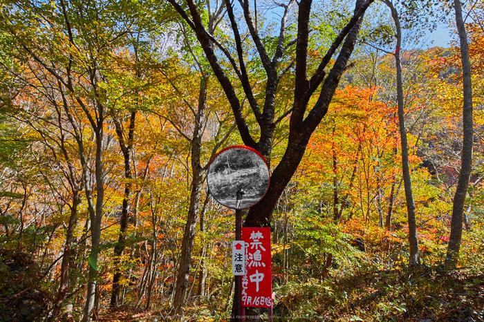 天ノ川渓谷,紅葉(IMG_8497,20 mm,F8,iso100)2015yaotomi_.jpg