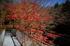 天ノ川渓谷,紅葉(IMG_8506f,20 mm,F1.4,100)2015yaotomi_.jpg