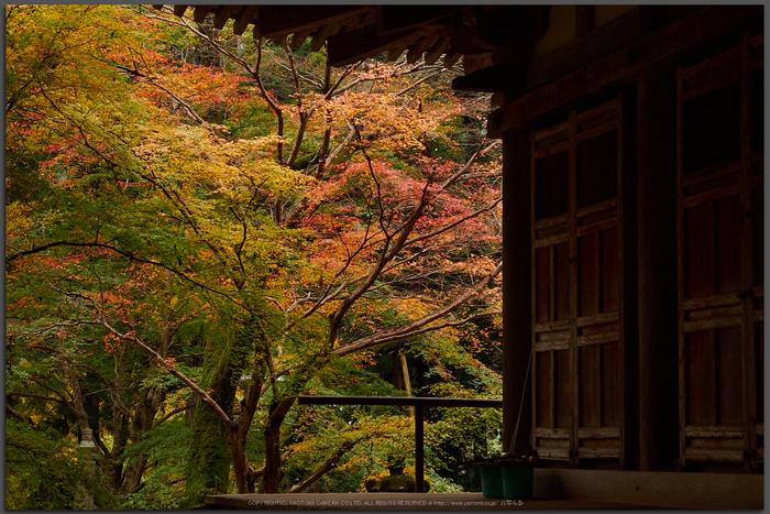 室生寺,紅葉(PB190135,40-mm,F7.1,iso200)2015yaotomi_T.jpg
