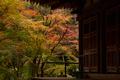 室生寺,紅葉(PB190135f,40 mm,F7.1,iso200)2015yaotomi_.jpg