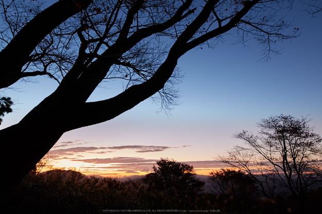 屏風岩公苑,紅葉(IMG_8235,20 mm,F7.1,iso100)2015yaotomi_.jpg