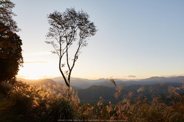 屏風岩公苑,紅葉(IMG_8288,20 mm,F5,iso100)2015yaotomi_ 1.jpg
