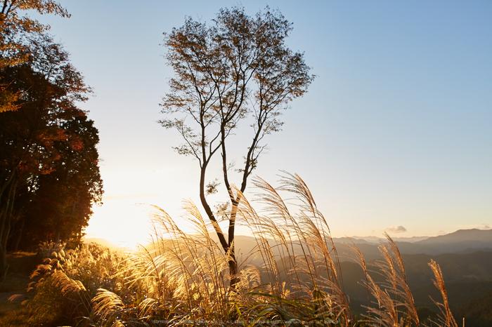 屏風岩公苑,紅葉(IMG_8290,20 mm,F5,iso100)2015yaotomi_ 1.jpg