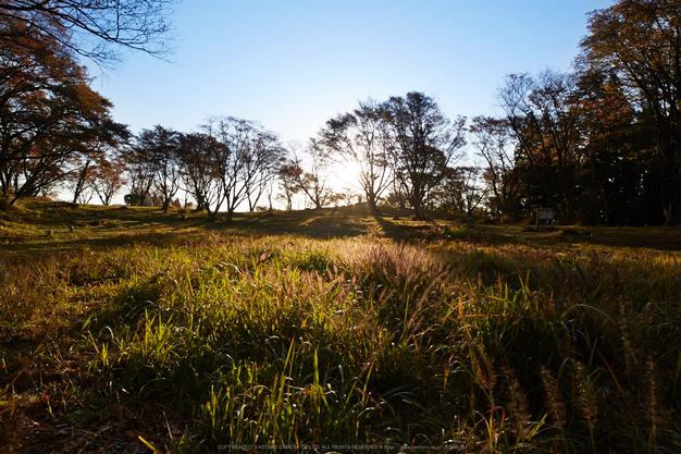 屏風岩公苑,紅葉(IMG_8364,20 mm,F8,iso100)2015yaotomi_.jpg