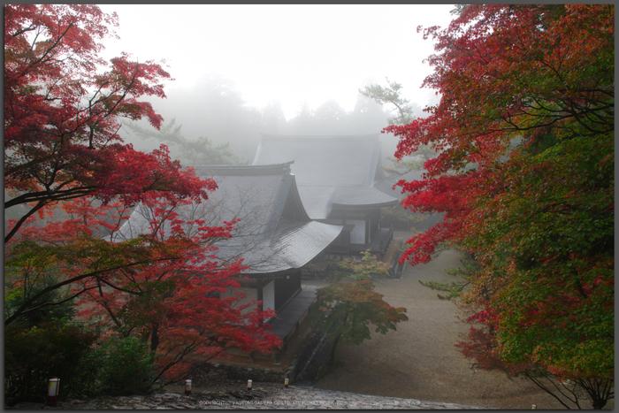 神護寺,紅葉(K32_3122fs(2)T,18-mm,F10,iso100)2015yaotomi_.jpg