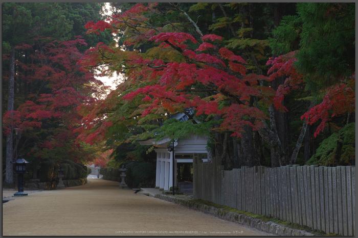 高野山,紅葉(K32_2506RR,58-mm,F13,iso200)2015yaotomi_T.jpg