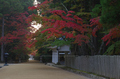 高野山,紅葉(K32_2506RRf,58 mm,F13,iso200)2015yaotomi_.jpg
