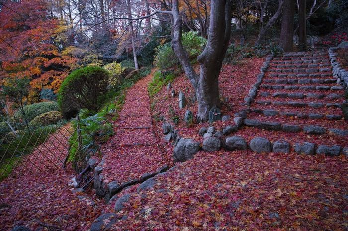 九品寺,紅葉(DP0Q0083b,14 mm,F5.6)2015yaotomi_.jpg