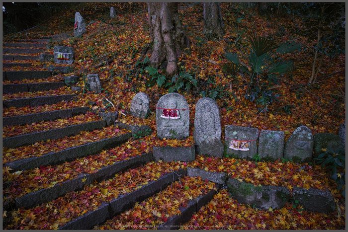 九品寺,紅葉(DP0Q0099,14-mm,F5.6)2015yaotomi_T.jpg
