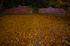 九品寺,紅葉(DP0Q0117f,14 mm,F5.6)2015yaotomi_.jpg